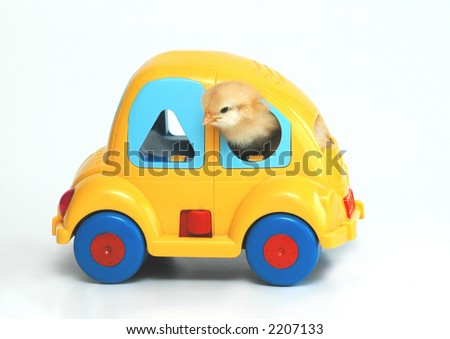 chicken on car