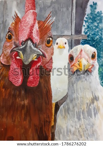 Chicken portrait in full face. Watercolor. A funny illustration. Hand-drawn. Painted. Three hens look at the camera.