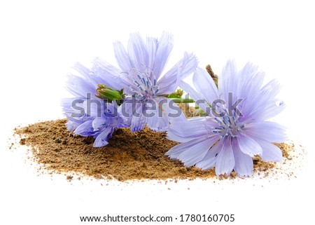 Chicory root and flowers are isolated on white background. Blue flowers of chicory. Chicory root is considered a coffee substitute and is a source of inulin. Inulin is used in the food industry. Foto stock ©