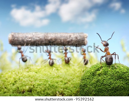 chief managing teamwork of ants