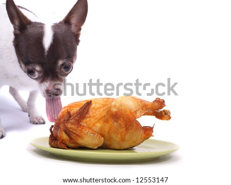 chihuahua and chicken on the green plate on the white background