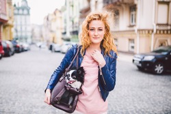 Chihuahua dog carried in pet bag. Cute dog in transparent pet travel carrier. Caucasian woman holding a carrying bag with pet on the street. The owner of small dog travels with a carrier for animals.