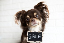 chihuahua dog holding a sale banner in mouth
