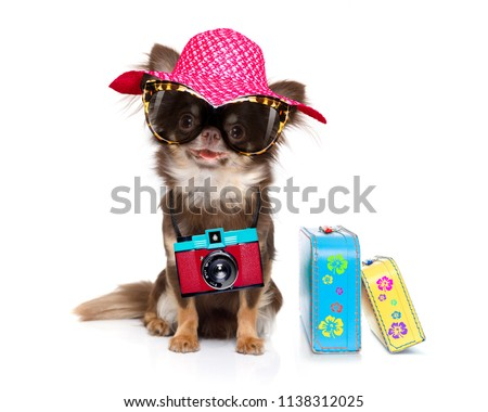 chihuahua dog looking so cool with fancy sunglasses  and photo camera ready for summer vacation, isolated on white background with luggage
