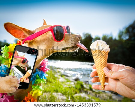 chihuahua  dog on   summer vacation holidays in the city and the beach and river   eating and licking   vanilla ice cream in cone waffle, taking a selfie with smartphone cellular telephone #1453391579