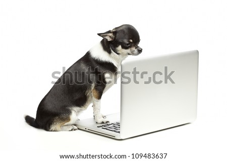 Chihuahua dog sitting on laptop on white background