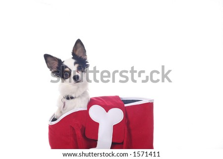 Chihuahua in a red bag