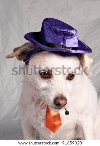 chihuahua in halloween costume