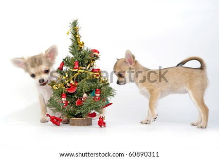 chihuahua puppies decorating a Christmas tree