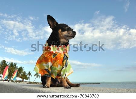 puppies in hawaii