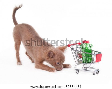 Chihuahua puppy playing with shopping cart, isolated on white background