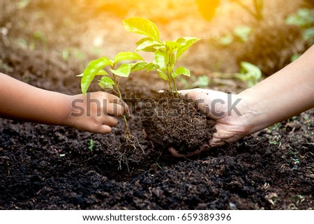 Child and parent hand planting young tree on black soil together as save world concept in vintage color tone - Shutterstock ID 659389396