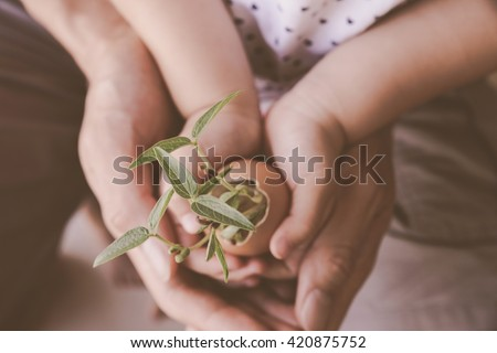 child and parents hands holding young plants in eggshell, education,Eco concept