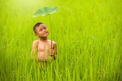 Child boy farmer smiling in rain central rice