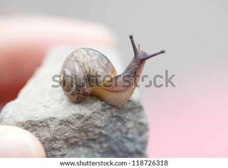 child boy picking snail in the park