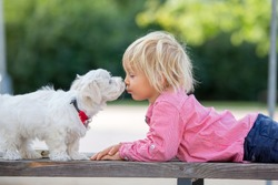 Child, cute boy, playing with dog pet in the park, maltese dog and kid enjoying walk together