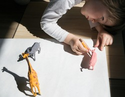 child draws contrasting shadows from the toy figures of animals along the contour with a pencil. drawing of a preschooler, creative ideas for children's creativity. Interesting activities for children