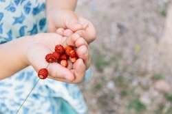 Child eating wild-picked strawberries in Sweden | Småland
