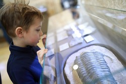 Child examines ancient petrified mollusk in museum