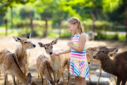 Child feeding wild deer at petting zoo. Kids feed animals at outdoor safari park. Little girl watching reindeer on a farm. Kid and pet animal. Family summer trip to zoological garden. Herd of deers.