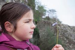 Child girl observing little wild flower. Botany for inquisitive children concept