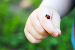 Child hand finger with lady bug crawling on it.