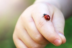 Child hand finger with lady bug crawling on it. People.