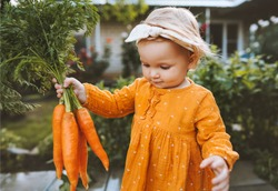 Child holding carrots in garden healthy food lifestyle vegan organic vegetables homegrown agriculture farming concept