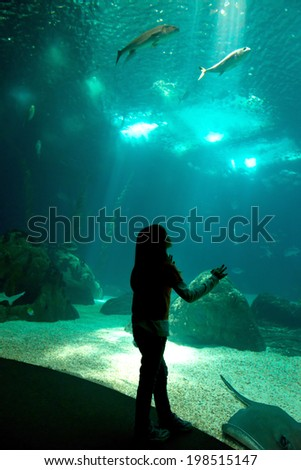 Child in a water park looking at fish through the glass