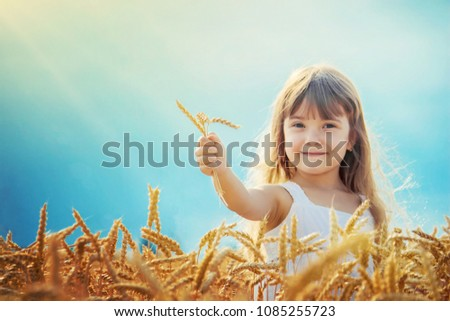 child in a wheat field. selective focus. #1085255723