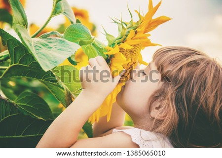 child in the field of sunflowers is a small farmer. selective focus. nature. #1385065010