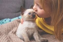 child kisses a siamese kitten. thai kitten is a pet. cat and baby