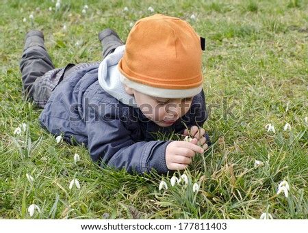 Child lying on grass in early spring exploring snowdrops flowers.