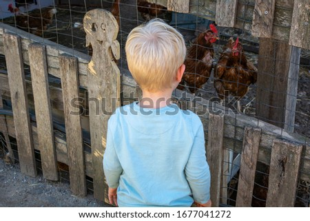 Child on his back with a light blue shirt looking at the chickens through the wooden fence