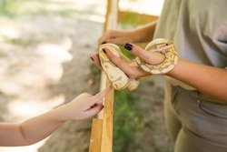 Child petting a snake with handler