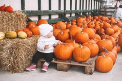 Child picking pumpkins at pumpkin patch. Little toddler girl playing among squash at farm market. Thanksgiving holiday season. Family autumn background.