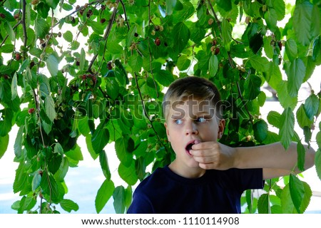 Child pics a berries from the tree. healthy childhood, vacations in the village. Boy witn berries