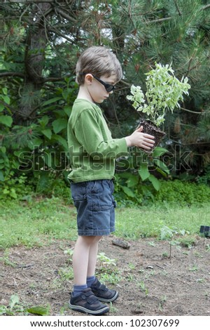 Child planting a basil plant in the garden - stock photo
