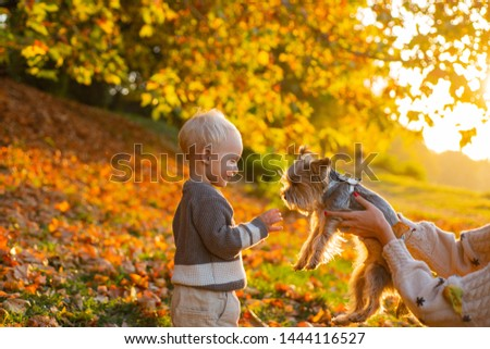 Child play with yorkshire terrier dog. Toddler boy enjoy autumn with dog friend. Small baby toddler on sunny autumn day walk with dog. Warmth and coziness. Happy childhood. Sweet childhood memories. #1444116527
