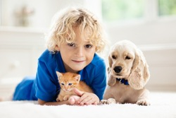 Child playing with baby dog and cat. Kids play with puppy and kitten. Little boy and American cocker spaniel on bed at home. Children and pets at home. Kid taking nap with pet. Animal care.