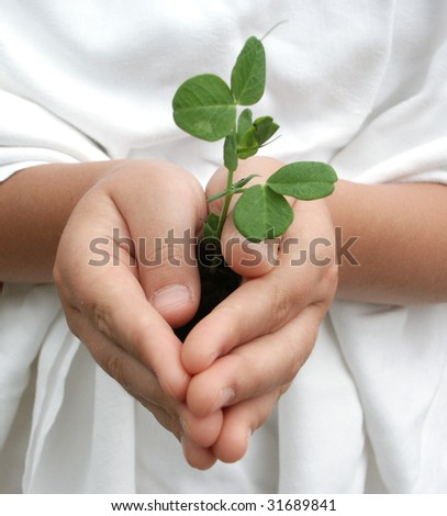 Child's hands carefully holding a pea plant