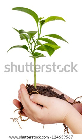 Child's hands holding green plant in soil isolated on white background