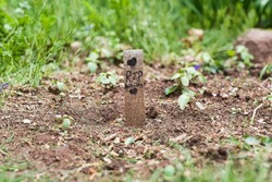 Child's rest in peace grave marker for family pet