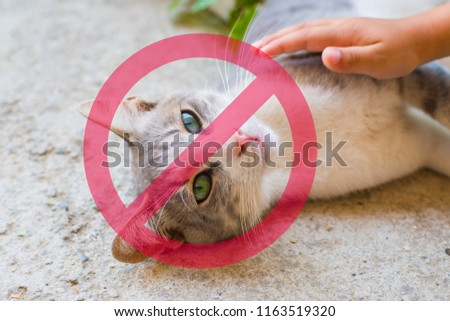 child stroking the cat. Prohibition sign to touch the animals #1163519320