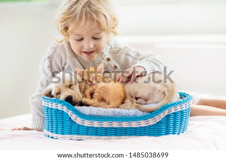 Child with baby dog and cat. Kids play with puppy and kitten in a basket. Little boy and American cocker spaniel on bed at home. Pets at home. Animal care. ストックフォト ©