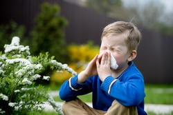Child with pollen allergy. Boy sneezing and blowing nose because of seasonal allergy while sitting in a grass. Spring allergy concept. Flowering bushes and trees in background. Child allergy