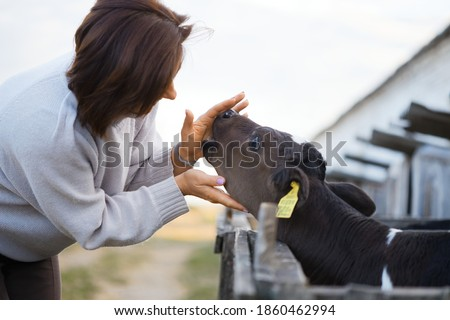 children feed little calves of cows on the farm
