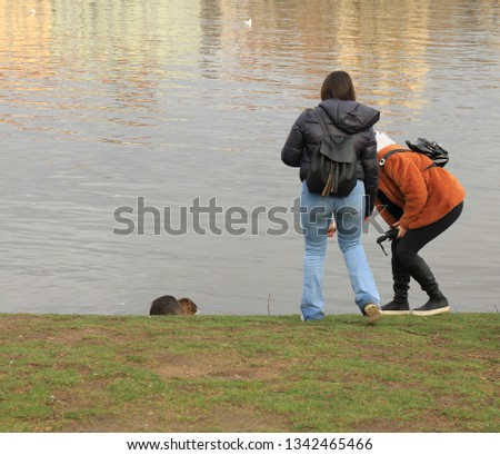 Children feed water rat. People take pictures of nutria crawling out of the water. water rat goes to people.