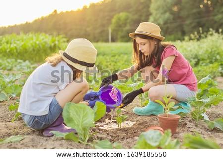 Children girls planting flowering pot plant in ground. Little beautiful gardeners in gloves with garden shovels watering planted flower, background spring summer rural landscape, golden hour