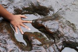 Children hand on real dinosaur footprint , selective focus .
